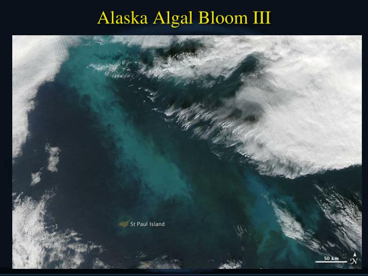Alaska Algal Bloom III