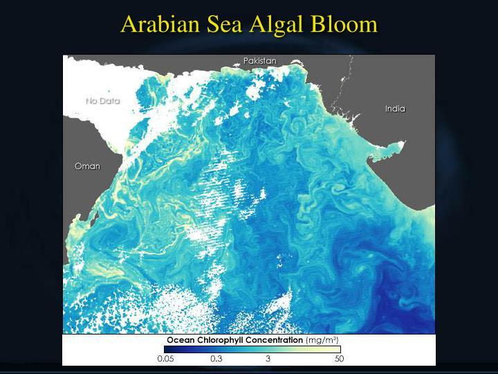 Arabian Sea Algal Bloom