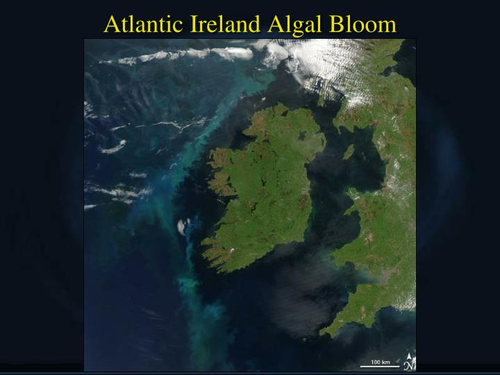 Atlantic Ireland Algal Bloom