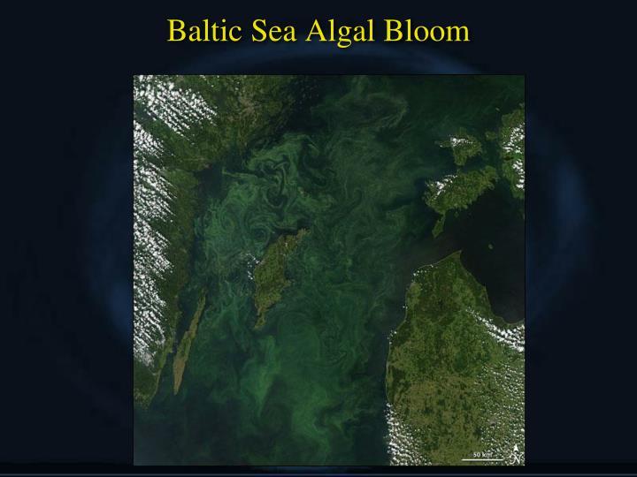 Baltic Sea Algal Bloom