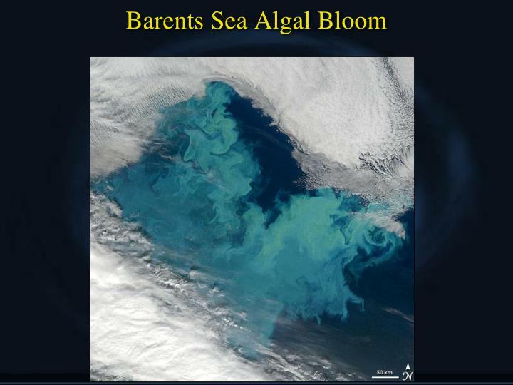 Barents Sea Algal Bloom