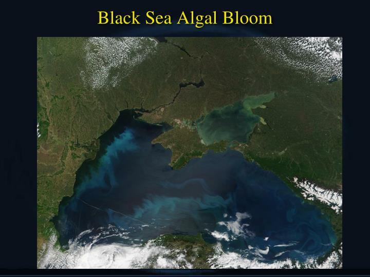 Black Sea Algal Bloom