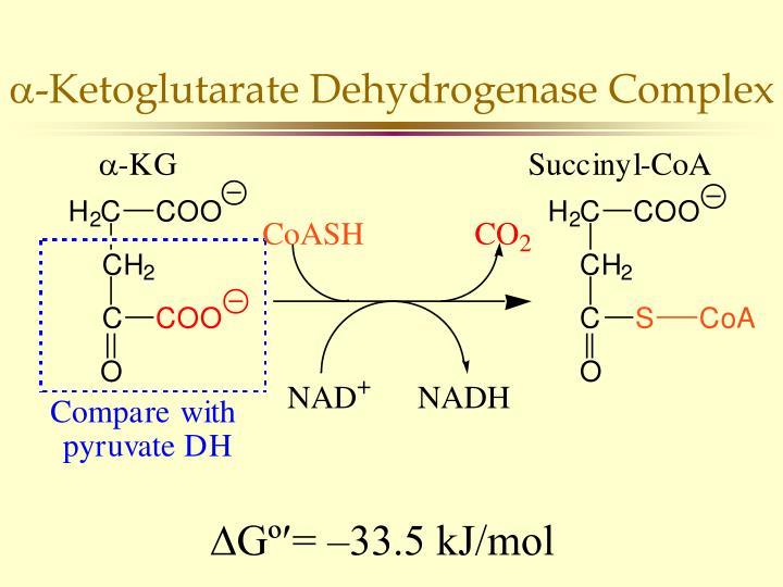 -Ketoglutarate Dehydrogenase Complex