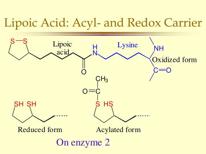Lipoic Acid: Acyl- and Redox Carrier