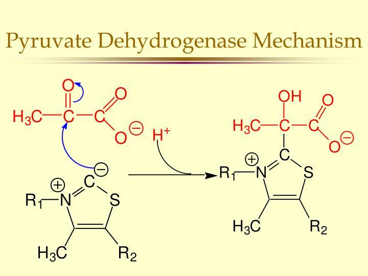 Pyruvate Dehydrogenase Mechanism