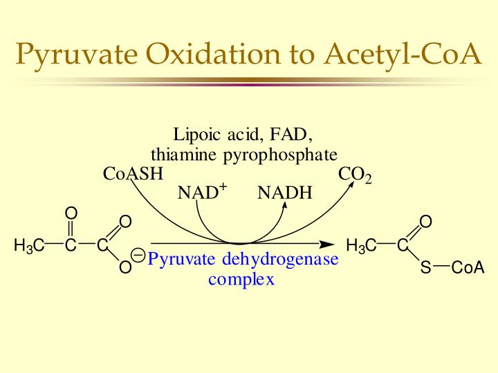 Pyruvate Oxidation to Acetyl-CoA