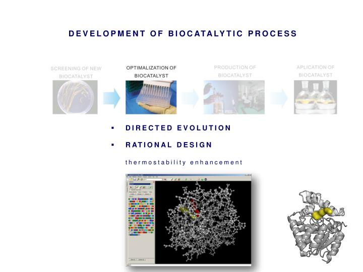 DEVELOPMENT OF BIOCATALYTIC PROCESS