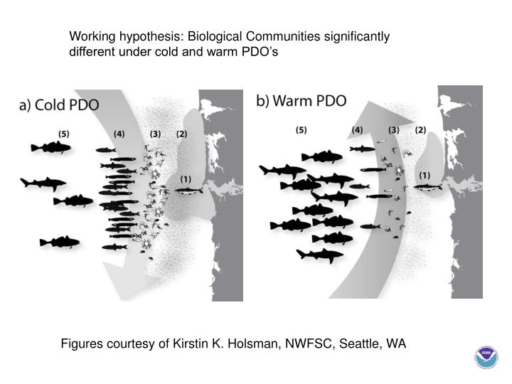 Working hypothesis: Biological Communities significantly different under cold and warm PDO's