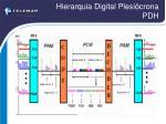 hierarquia digital plesi crona pdh