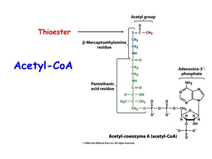 Acetyl-CoA
