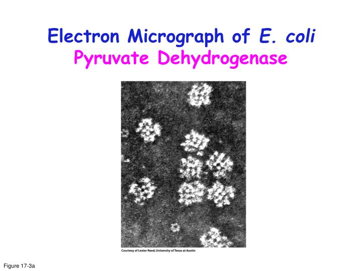 Electron Micrograph of