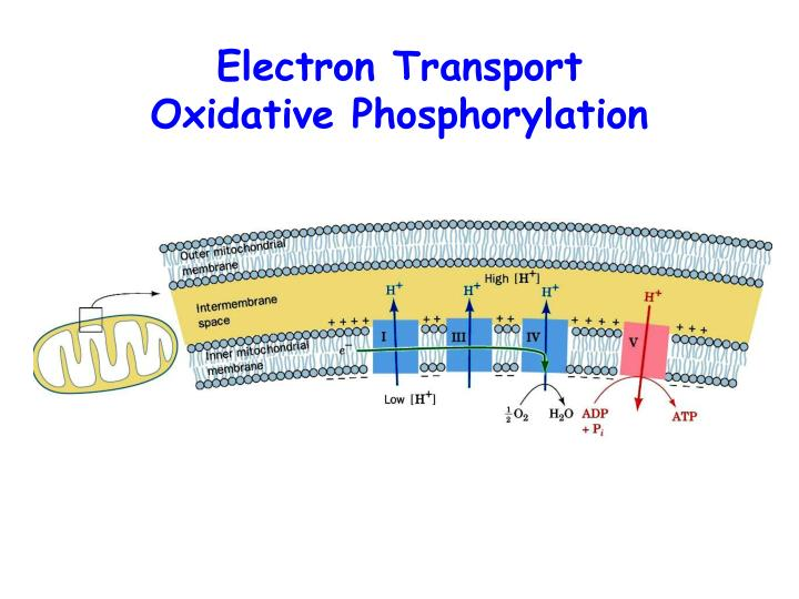 Electron Transport