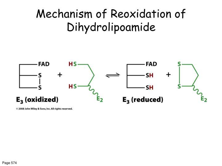 Mechanism of Reoxidation of Dihydrolipoamide