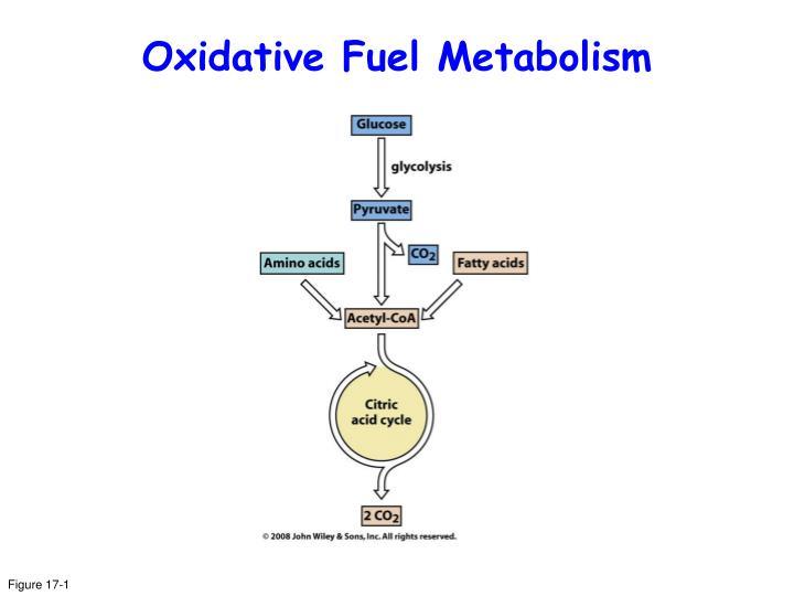 Oxidative Fuel Metabolism