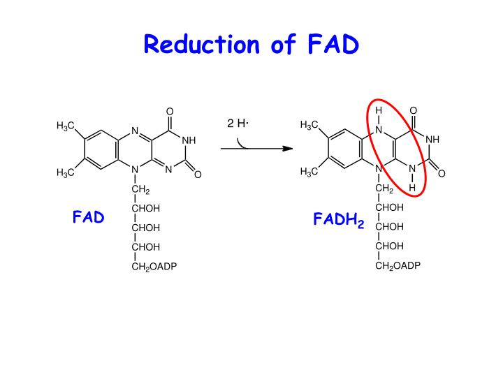 Reduction of FAD