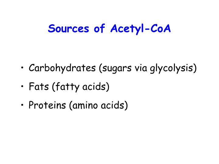 Sources of Acetyl-CoA