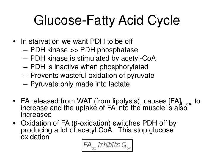 Glucose-Fatty Acid Cycle