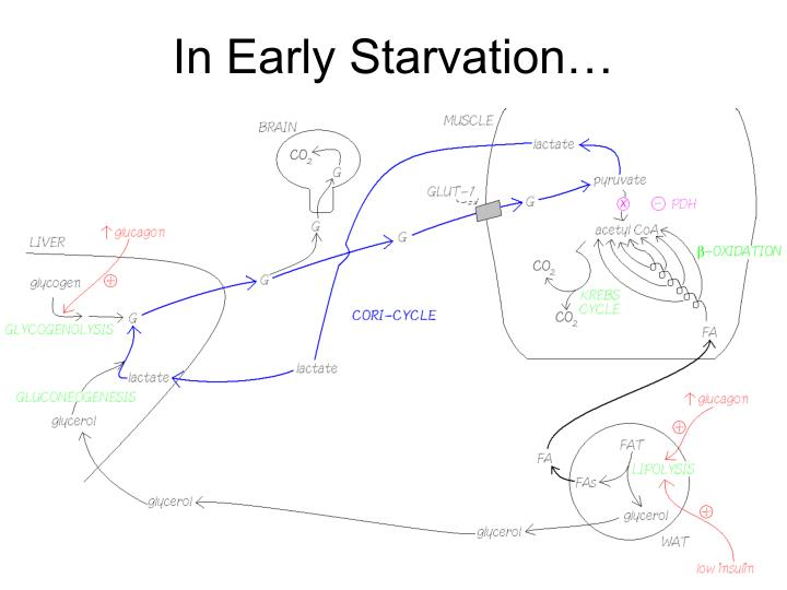 In Early Starvation…