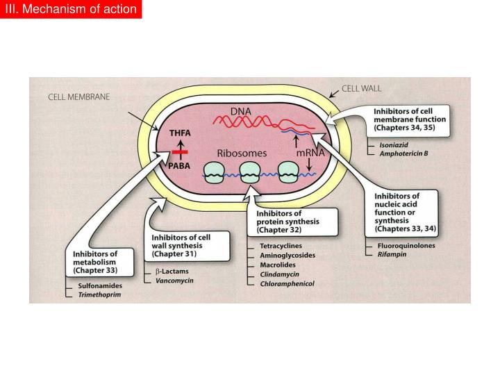 III. Mechanism of action