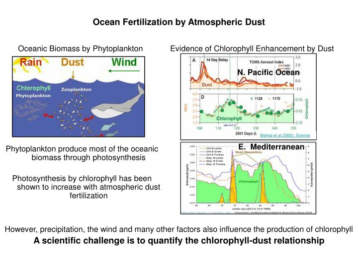 Phytoplankton produce most of the oceanic biomass through photosynthesis