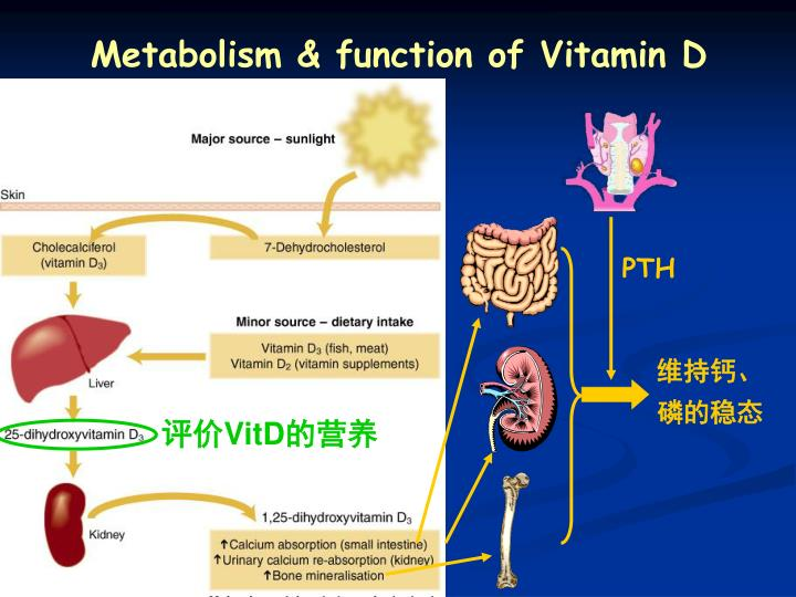 Metabolism & function of Vitamin D
