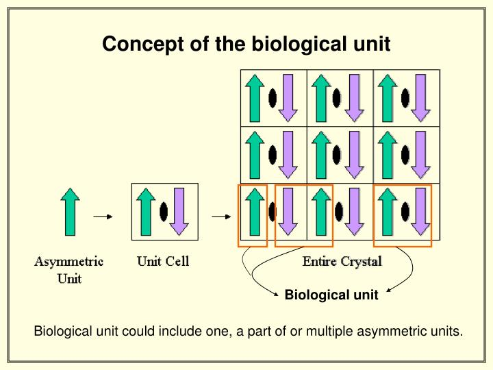 Concept of the biological unit
