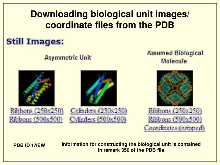 Downloading biological unit images/ coordinate files from the PDB