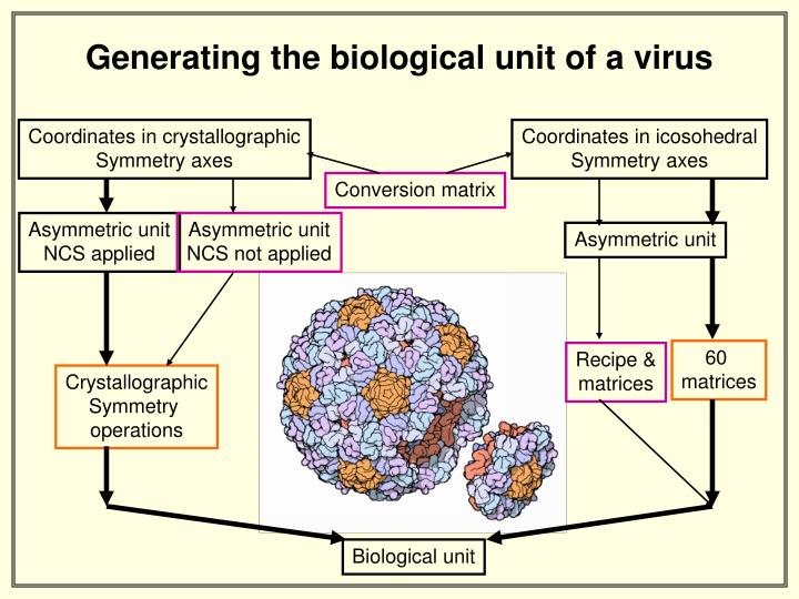 Generating the biological unit of a virus