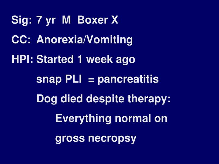 Sig: 7 yr  M  Boxer X