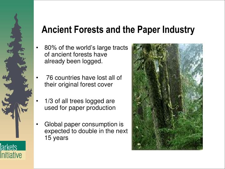 80% of the world's large tracts of ancient forests have already been logged.