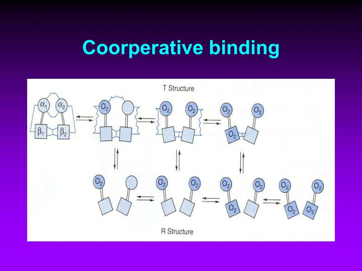 Coorperative binding