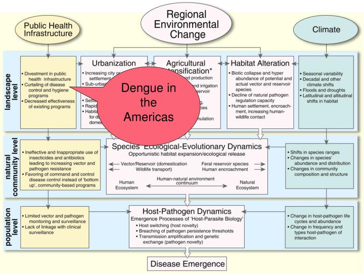 Dengue in the Americas