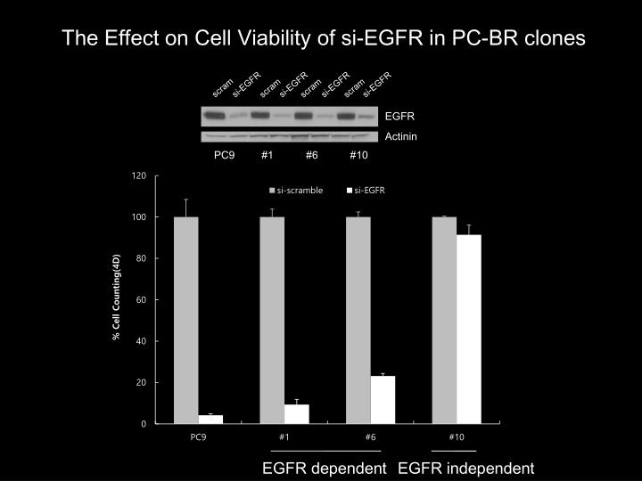 The Effect on Cell Viability of si-EGFR in PC-BR clones