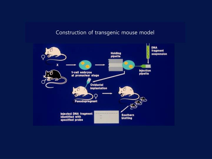 Construction of transgenic mouse model