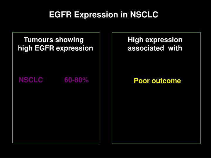 EGFR Expression in NSCLC