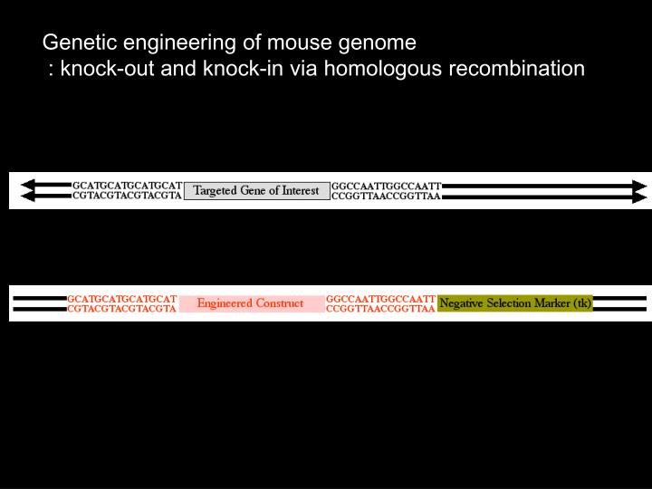 Genetic engineering of mouse genome