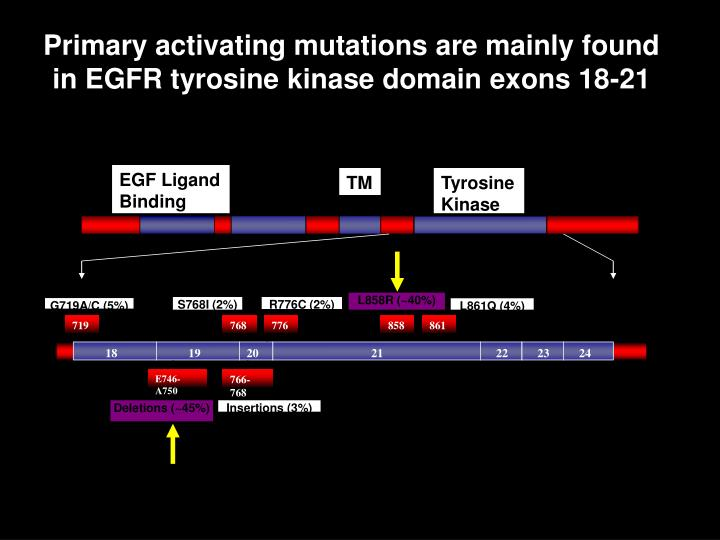 Primary activating mutations are mainly found in EGFR tyrosine kinase domain exons 18-21