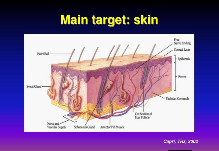 Main target: skin
