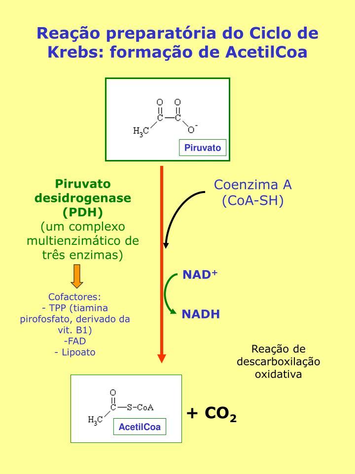 AcetilCoa
