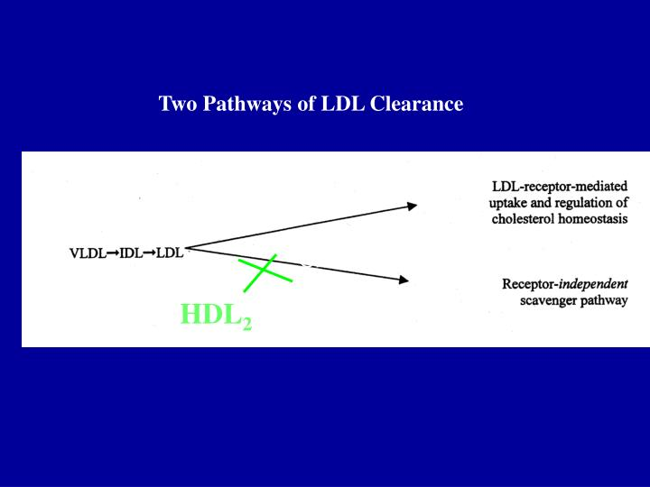 Two Pathways of LDL Clearance