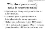 what about genes normally active in heterochromatin