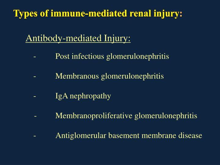 Types of immune-mediated renal injury