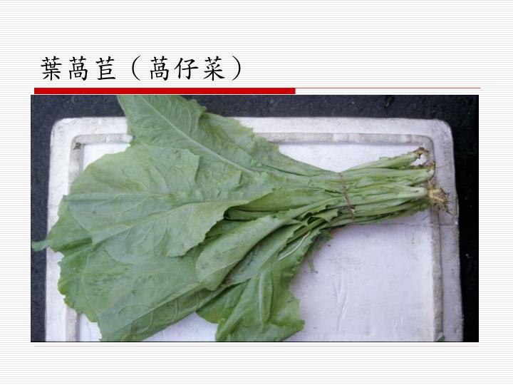葉萵苣(萵仔菜)