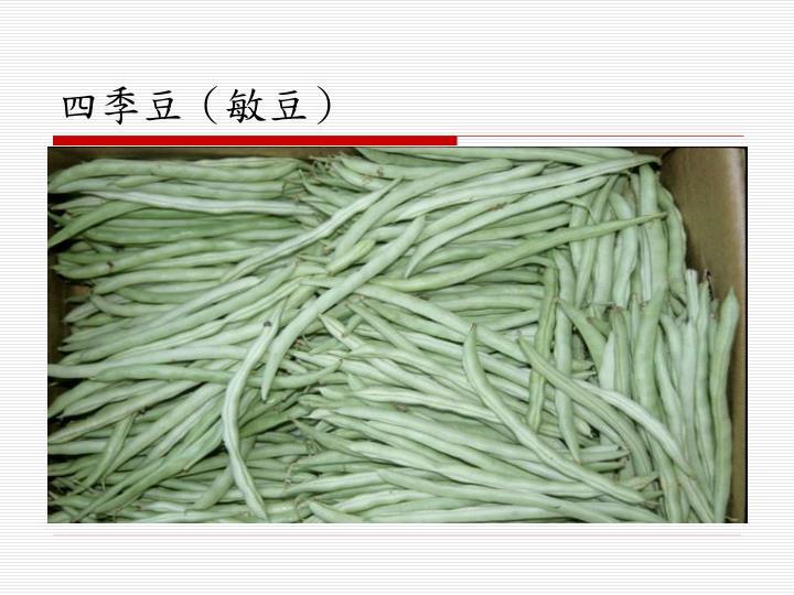 四季豆(敏豆)