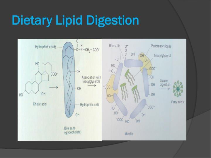 Dietary Lipid Digestion