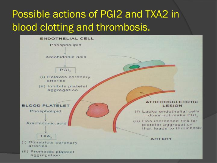 Possible actions of PGI2 and TXA2 in blood clotting and thrombosis.