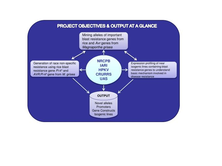 PROJECT OBJECTIVES & OUTPUT AT A GLANCE