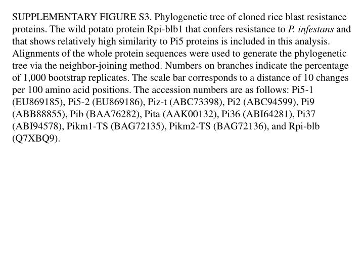 SUPPLEMENTARY FIGURE S3. Phylogenetic tree of cloned rice blast resistance proteins. The wild potato protein Rpi-blb1 that confers resistance to