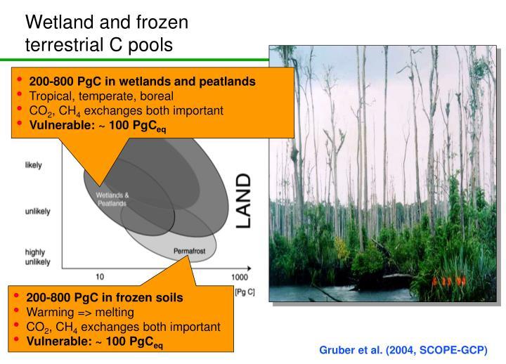 Wetland and frozen