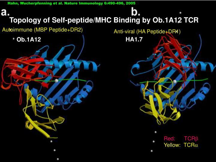 Hahn, Wucherpfenning et al. Nature Immunology 6:490-496, 2005